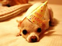 Funny Happy Birthday Wishes_1
