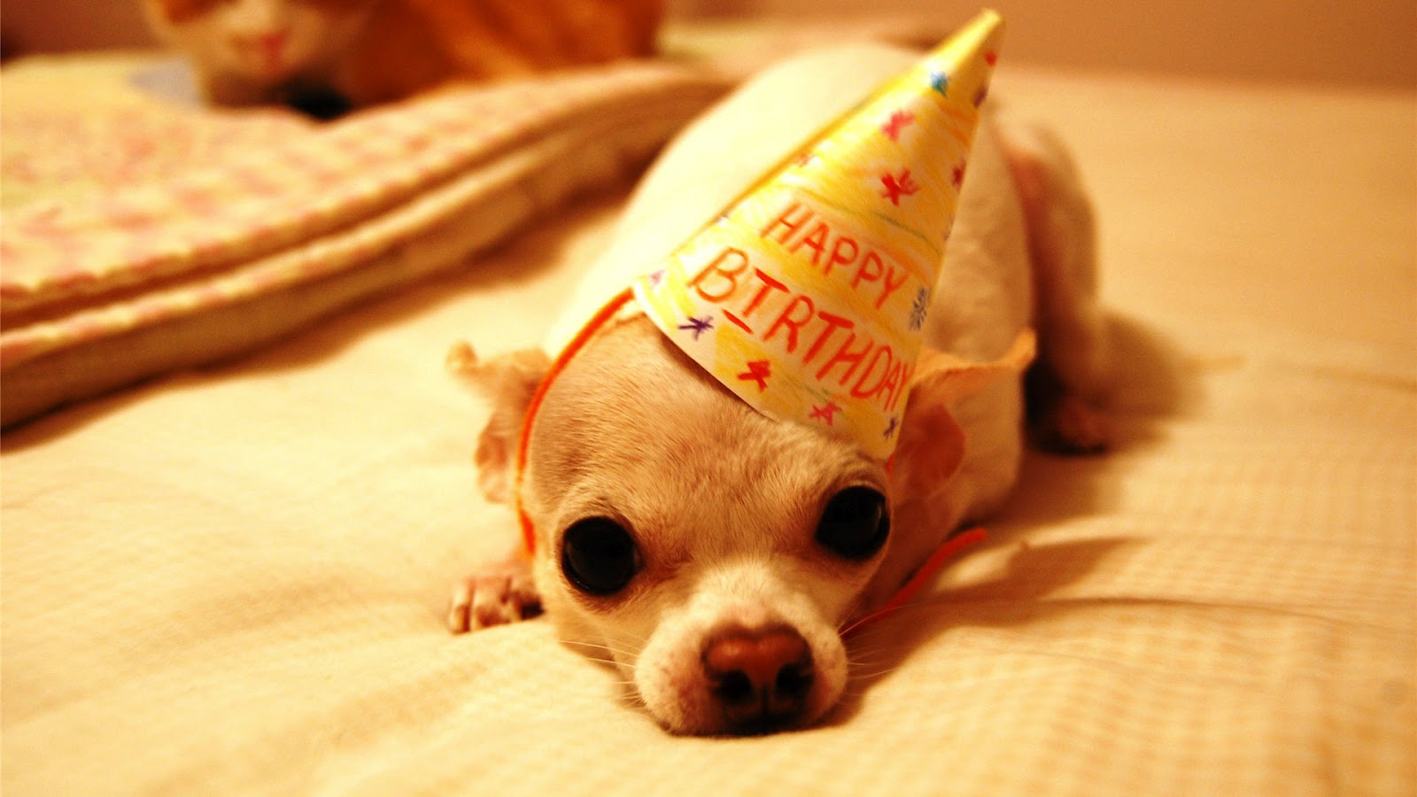 Funny Happy Birthday Wishes Images Messages And Wallpapers