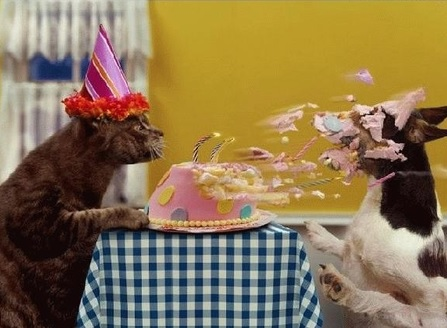 Happy-Birthday-funny images wishes