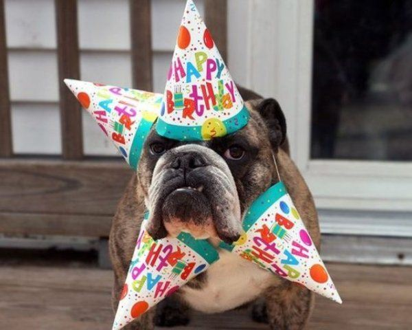 Funny happy birthday pictures - funny birthday pics